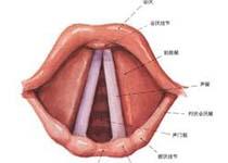 家长必知 导致先天性喉喘鸣的七大病因