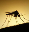 干旱季节的蚊子更容易叮咬宿主以获取水分